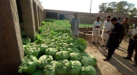خانیوال میں ذخیرہ اندوزوں کے خلاف آپریشن، گندم کی 1500 بوریاں برآمد