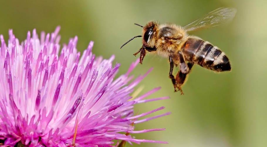 شہد کی مکھیوں کا عالمی دن اور انسانیت کی بقاء کیلئے اقدامات کی ضرورت