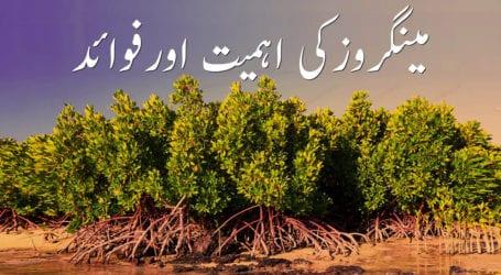 """""""کلین اینڈ گرین پاکستان"""" کے پی ٹی کا ایک لاکھ مینگروو لگانے کا عزم"""