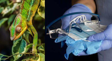 کورونا سے بچاؤ کیلئے تیار کردہ حفاظتی سامان جنگلی حیات کیلئے قاتل قرار