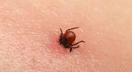 اس عید الاضحی پر کانگو وائرس سے خود کوکیسے محفوظ رکھا جائے؟