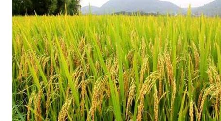 Pak-China to collaborate on 13 mega agricultural projects