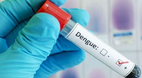 Punjab reports four dengue cases in 24 hours