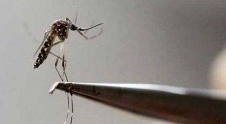 Dengue becomes life-threatening disease in Punjab
