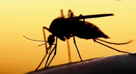 Dengue claims two more lives in Rawalpindi