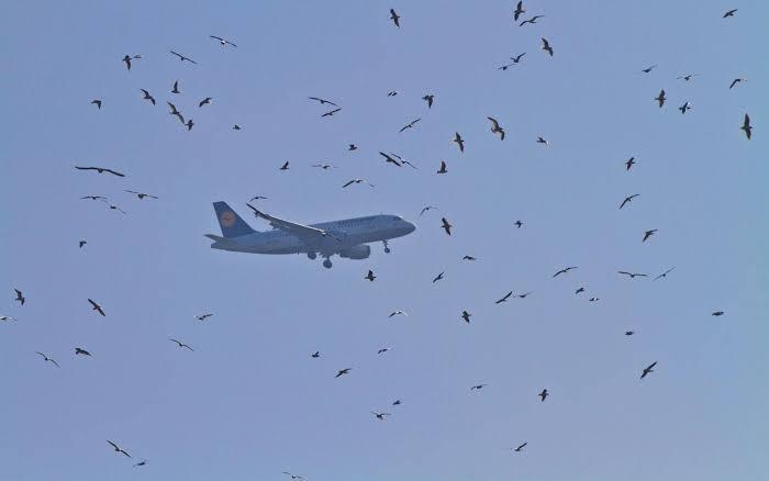 Bird bumps into flying plane travelling to Peshawar
