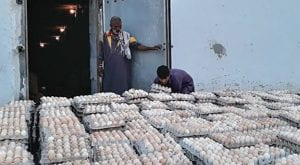Four arrested by SFA for selling fake plastic eggs in Karachi