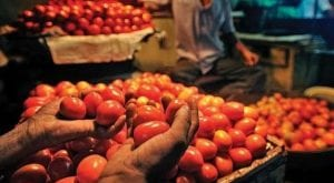 Tomatoes imported from Iran to reach Pakistan today