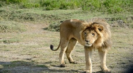 White lion attacks zookeeper in Karachi