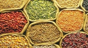 Federal govt to reduce four major pulses prices
