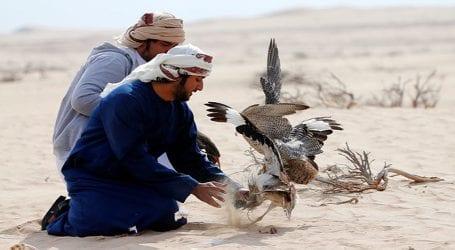 UAE royals allowed to hunt rare houbara bustards