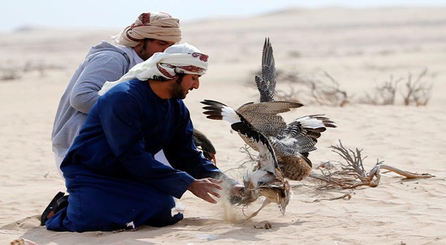 Pakistan allows UAE royals to hunt rare 'Houbara Bustards'
