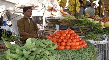 Imported vegetable prices hit new peaks
