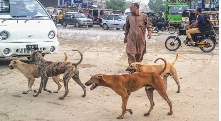Secretary local govt orders to re-launch anti dog bite campaign in Sindh