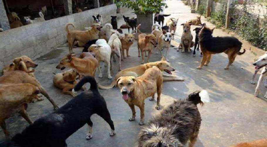 150 dog bite cases reported in Karachi within a week