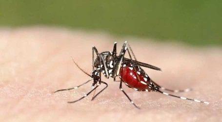 1st dengue death of year: Woman dies of dengue fever in Karachi