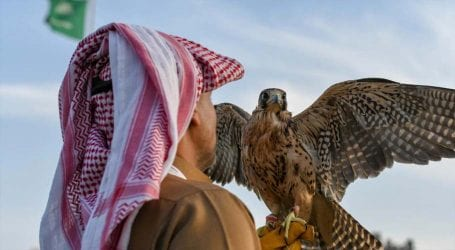 Saudi prince gets approval to export 50 falcons from Pakistan
