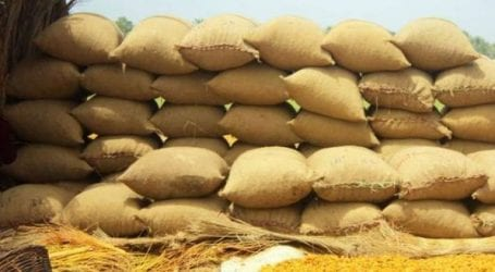 ECC proposes Rs 1600 as minimum support price for wheat