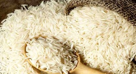 Rice exports increase by 11.09% in 8 months
