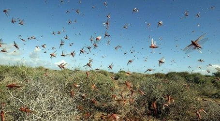 CWSA supports Pakistan in fight against locust plague