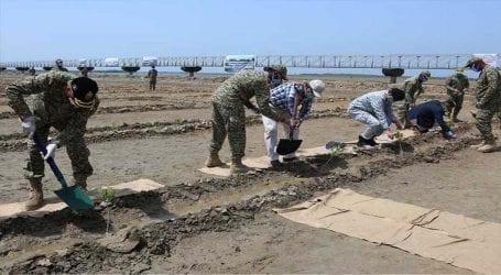 Pakistan Navy launches mangrove plantation drives in Balochsitan, Sindh