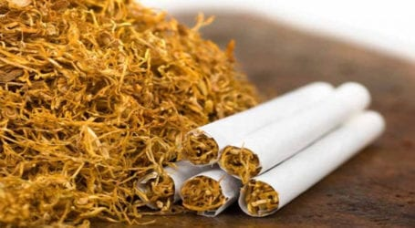 Tobacco exports surge 60pc to $28.7m