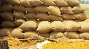 The total production of wheat iwas estimated at 27.33 million tons. Source: APP/FILE