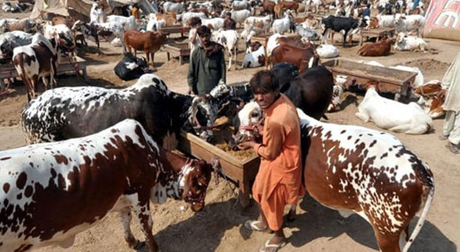 Federal govt issues guidelines for Eid-ul-Azha to prevent coronavirus