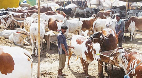 Punjab issues SOPs for cattle markets ahead of Eid-ul-Azha