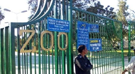 Committee formed to probe animals' death at Islamabad Zoo