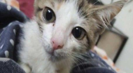 Teenage boys allegedly rape kitten in Lahore