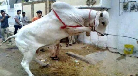 Celebrating Eid-ul-Azha in a responsible way