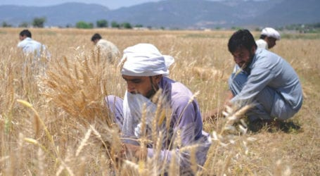 Govt approves Rs6.861 billion markup subsidy on agri-loans