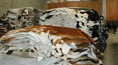 Five NGOs you can donate animal hides to