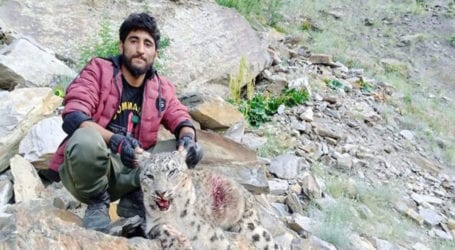 Four jailed for illegally hunting snow leopard in GB