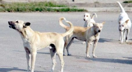 Stray dogs attack, injure four children in Rawalpindi