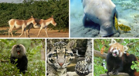 Can we save Pakistan's declining Wildlife?