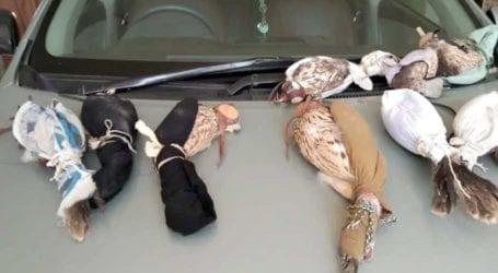 Karachi police foil bid to smuggle rare falcons, hawks