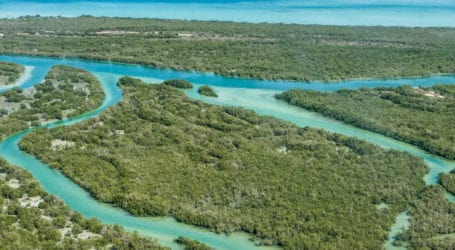 KU, UNESCO Thailand urges for conservation of mangrove ecosystem