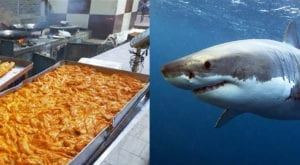 Shark meat, sea bat being sold as finger fish