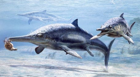 New species of pre-historic marine reptile discovered