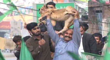 PML-N activist brings lion cub to Wazirabad rally by violating rules