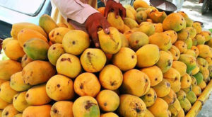 Japan approves Pakistan's mango facility for exports