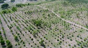 SECMC completes its million-trees in Thar campaign