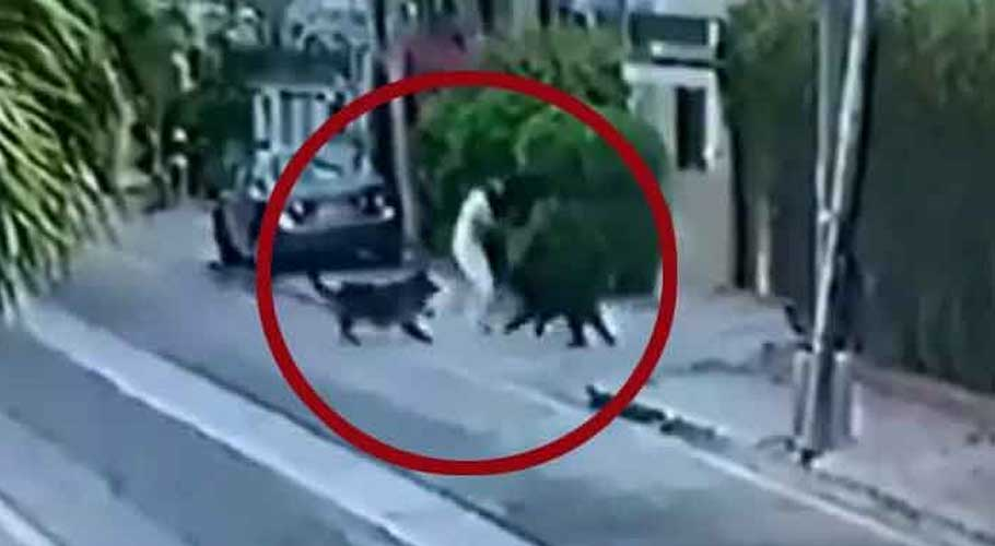Two pet dogs can be seen in this screengrab from CCTV footage attacking Advocate Mirza Ali Akhtar