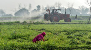 Fifty agriculture lending institutions are providing agricultural loans to farmers. Source: Arab News