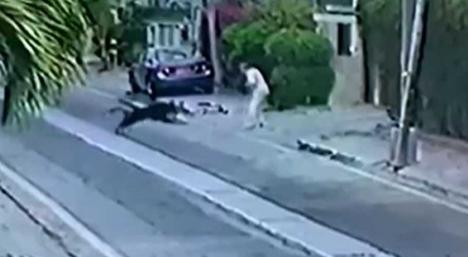 A screengrab from a video showing dogs attacking lawyer