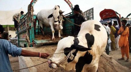 NCOC makes vaccination mandatory for staff, traders at cattle markets