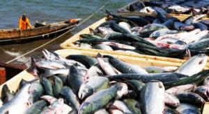 Pakistan exported 184.396 metric tons seafood. Source: The News.