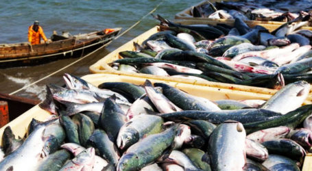 Seafood exports increase by 1.85% in FY21